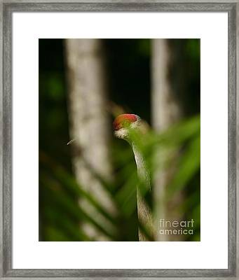 Peeping Crane Framed Print by Matt Tilghman