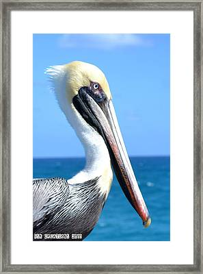 Pelican Framed Print by Fern Korn