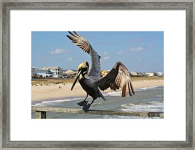 Pelican Landing On The Pier Framed Print by Paulette Thomas