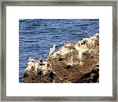 Pelican Rock Framed Print by Chris Anderson