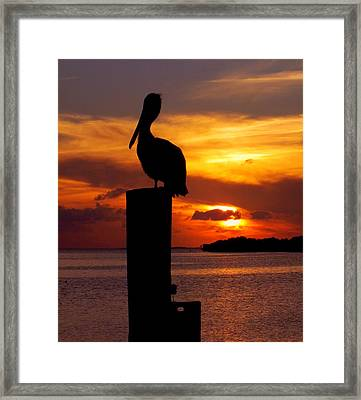 Pelican Sundown Framed Print by Karen Wiles