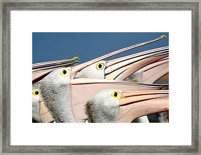 Pelicans (eyes Have It) Framed Print by An Gobán Saor