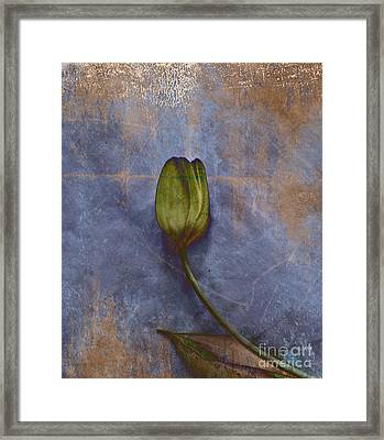 Penchant Naturel - 07at04b3 Framed Print by Variance Collections