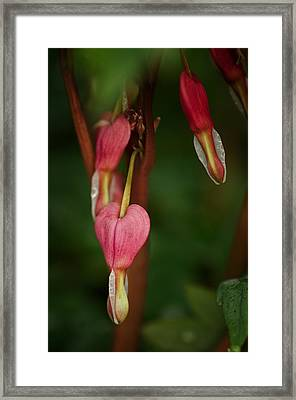Pendants Framed Print by Susan Capuano