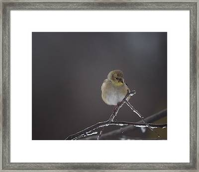 Pensive Framed Print by Susan Capuano