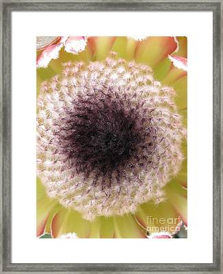 Perceptiveness Framed Print by Tina Marie