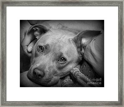 Perfect Companion Framed Print by Renee Trenholm