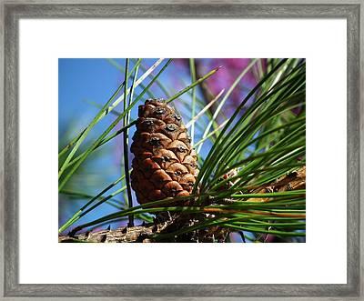 Perfect Pine Framed Print by Linda Koester