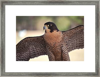 Perfection Defined Framed Print by Adele Moscaritolo