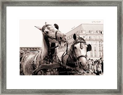 Performing Horses Framed Print by Helge Peters