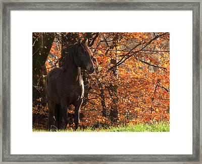 Peruvian Stallion Framed Print by Michael Mogensen