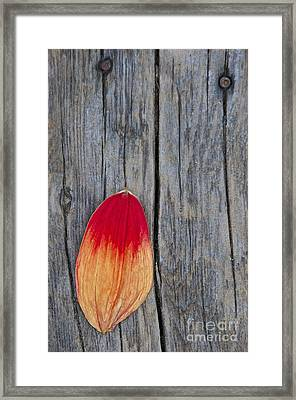 Petal On Wood Framed Print by Sean Griffin
