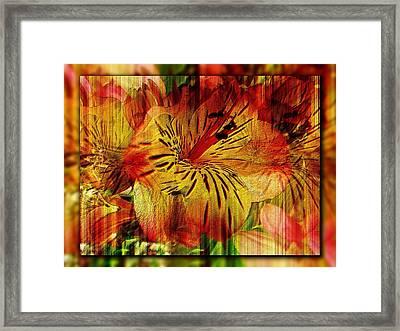 Petal Paradigm Framed Print by Tim Allen