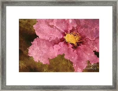 Petaline - Ar01bt04c2 Framed Print by Variance Collections