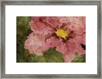 Petaline - Ar01bt05 Framed Print by Variance Collections
