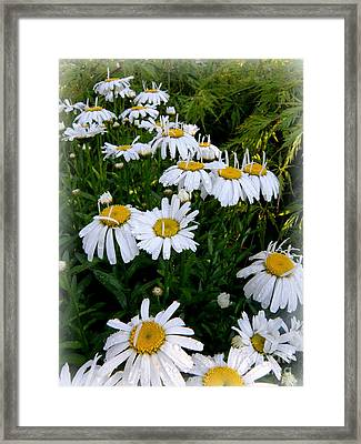 Petals Up Framed Print by Tanya  Searcy