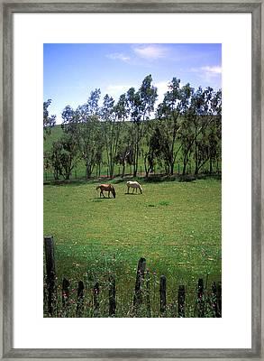 Petaluma Pasture Framed Print by Kathy Yates