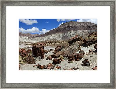 Petrified Forest 2 Framed Print by Bob Christopher