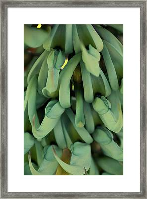 Philippine Jade Vine Framed Print by Paul Plaine