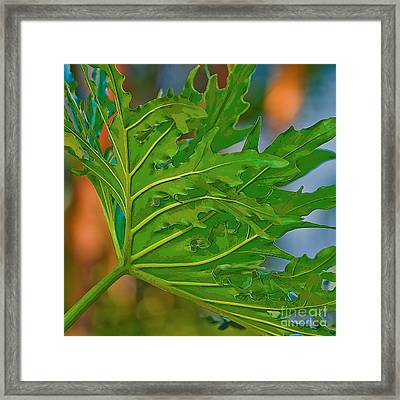 Philodendron Framed Print by Herb Paynter