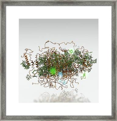 Photosystem I, Molecular Model Framed Print by Ramon Andrade 3dciencia