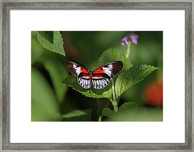 Piano Key Butterfly Framed Print by Juergen Roth