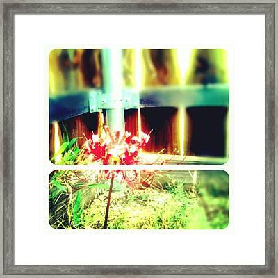#picframe #nature #random Framed Print by Kel Hill