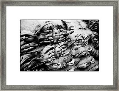 Pike Place Crab Framed Print by Tanya Harrison