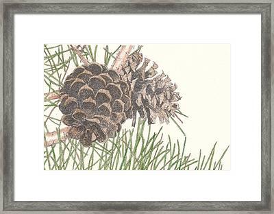 Pine Cone Framed Print by Marci Mongelli