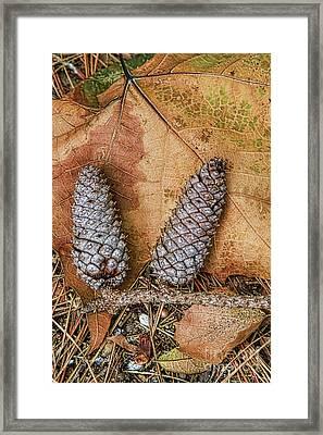 Pine Cones And Leaves Framed Print by Deborah Benoit