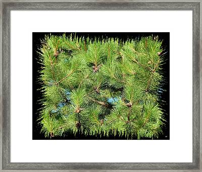 Pine Cones And Needles Framed Print by Will Borden