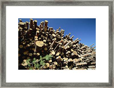 Pine Pinus Sp Logs Drying Framed Print by Konrad Wothe