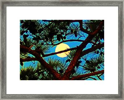 Pine Tree Moon Framed Print by Bill Cannon