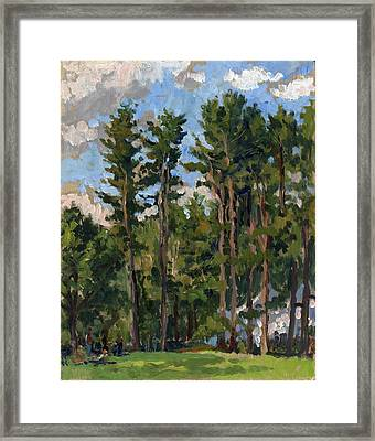 Pines At Tanglewood Framed Print by Thor Wickstrom