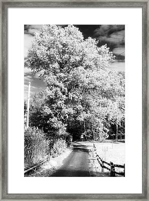 Piney Road Framed Print by John Rizzuto