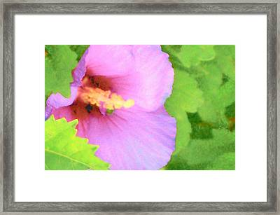 Pink Althea Framed Print by Wide Awake Arts