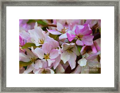 Pink And White Crabapple Blossoms Framed Print by Donna Munro