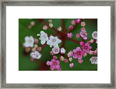 Pink And White Flowers Framed Print by Picture By La-ong