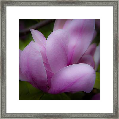Pink Blossoms Framed Print by David Patterson