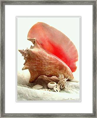 Pink Cong Shell Framed Print by Danielle  Parent