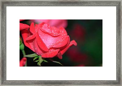 Pink Diamonds Framed Print by Christopher McPhail