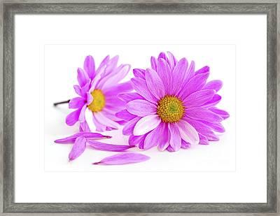 Pink Flowers Framed Print by Elena Elisseeva