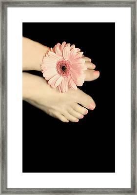 Pink Gerbera Daisy Framed Print by Diana Lee Angstadt