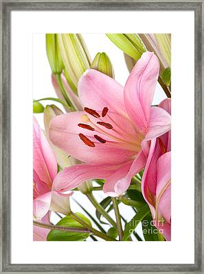 Pink Lilies 05 Framed Print by Nailia Schwarz