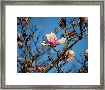 Pink Magnolia Flower Framed Print by Jai Johnson