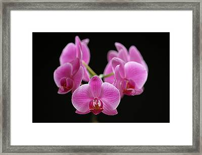 Pink March Madness Framed Print by Juergen Roth