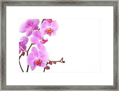 Pink Orchids Framed Print by Jane Rix