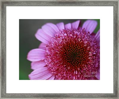 Pink Perfection Framed Print by Inspired Nature Photography Fine Art Photography