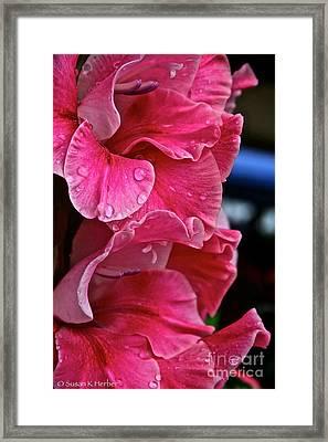 Pink Rain Framed Print by Susan Herber