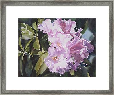 Pink Rhododendron Framed Print by Sharon Freeman